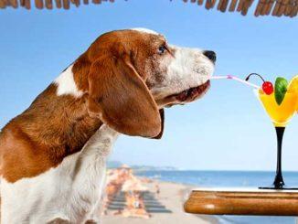 Отдых с собакой на море