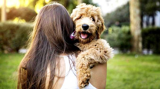 С чего начать воспитание щенка