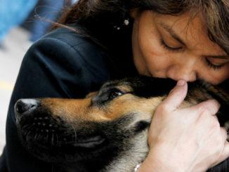 Слепая собака