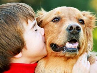 ребенкок и собака