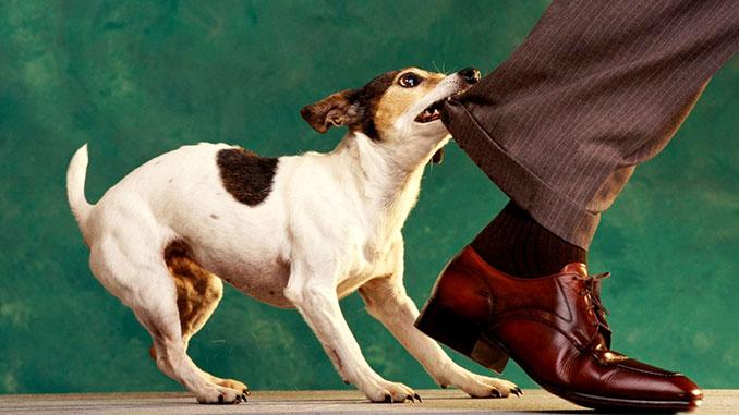 Собака кусает за ноги, как отучить