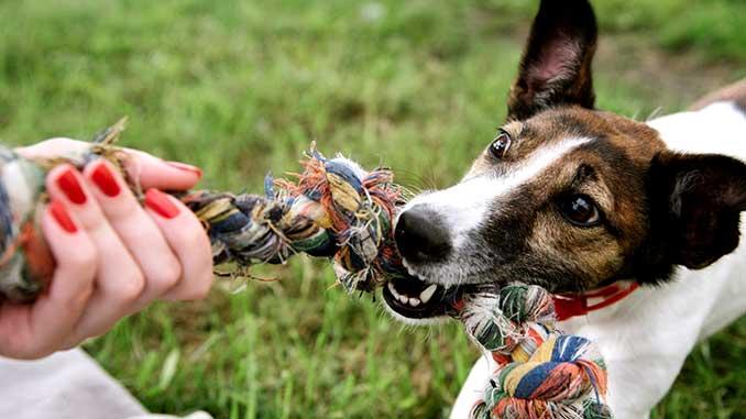 Собака кусается, как отучить