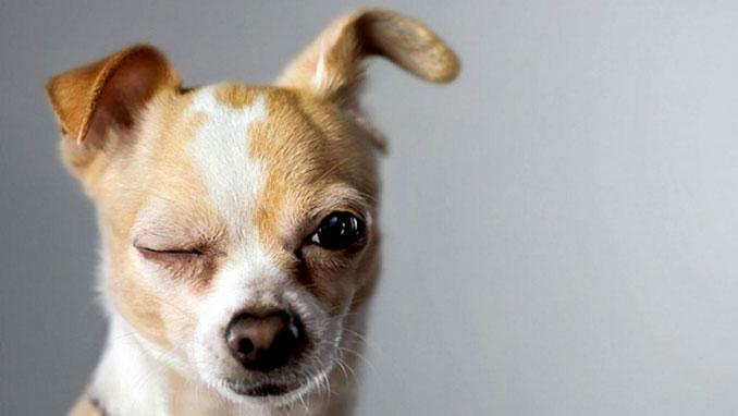 как ухаживать за глазами собаки