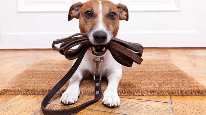 куда пристроить собаку на время отпуска