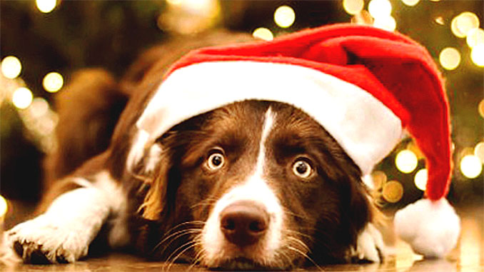 как помочь пережить собаке новогодние праздники