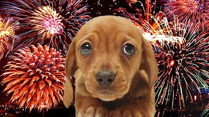 Собака боится фейерверков