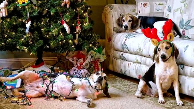 Собаки и новогодняя елка