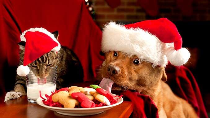 Еда для собак с хозяйского стола