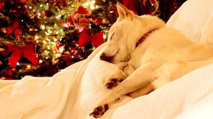 Собака спит под новогодней елкой