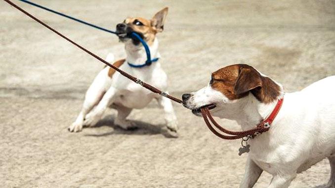 собака делает, что захочет