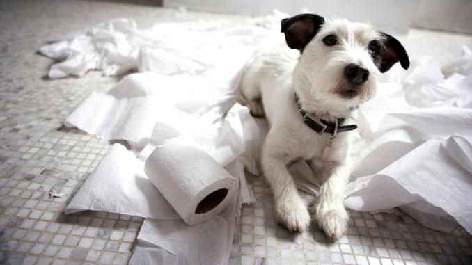 Что делать, если собака не слушается