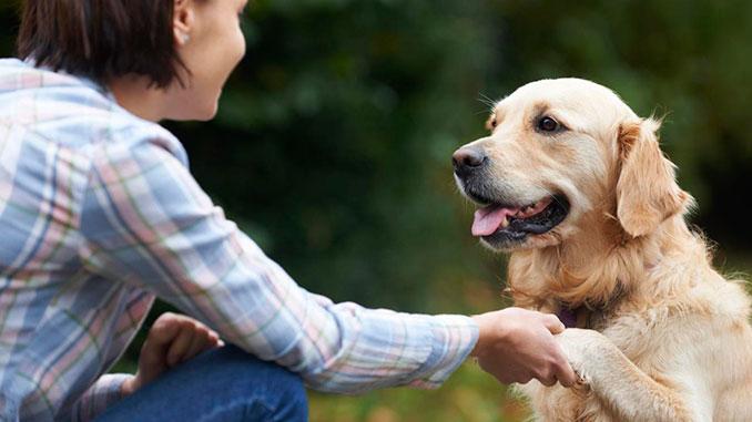 Как воспитать послушную собаку