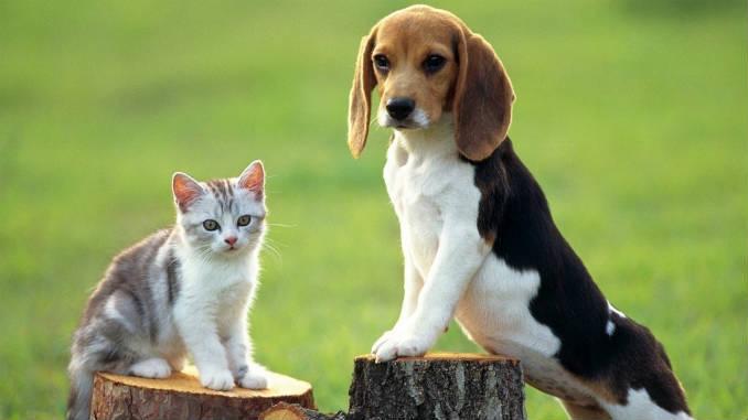 Бигль и котенок, фото
