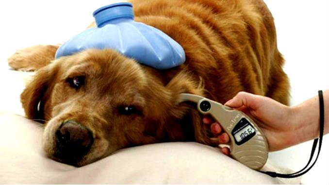 Диагностика диабета у собак