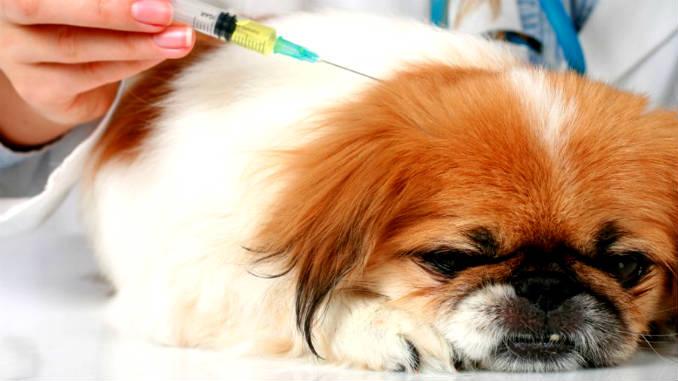 Лечение диабета у собак