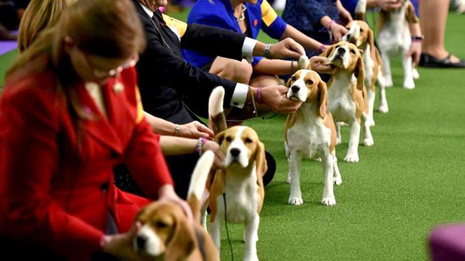 Выставка собак фото