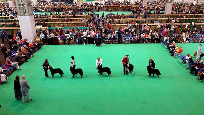 Выставка собак - фото ринга