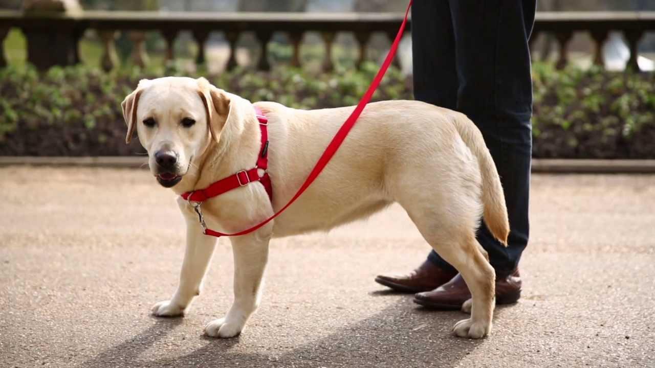 Фото дисплазии у собак