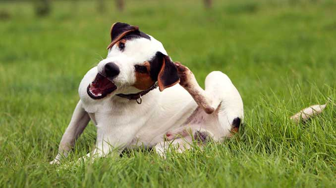 аллергия у собак фото