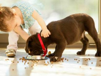 чем и как кормить щенка