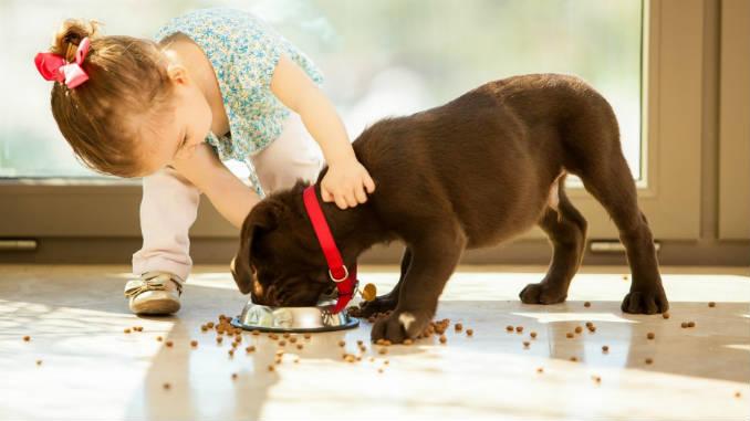 Как и чем кормить щенка от 1 месяца до года