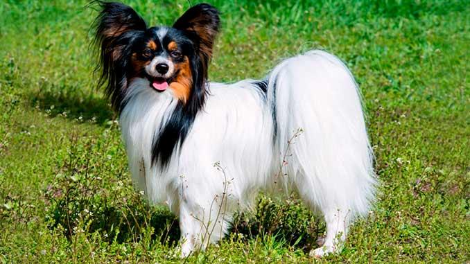 Собака для ребенка: лучшие породы для детей, рекомендации 28
