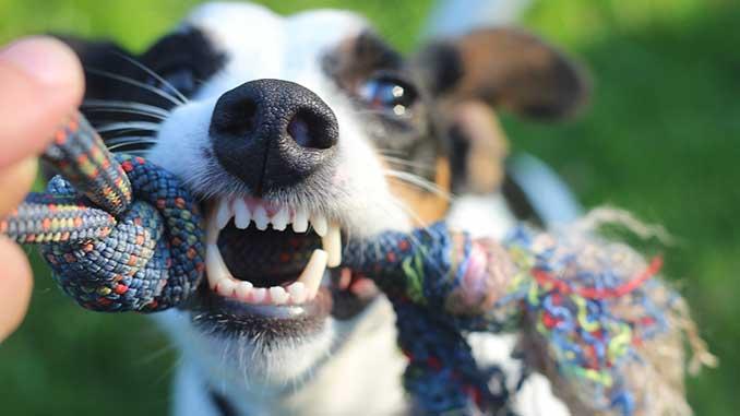 Зубной камень у собак фото