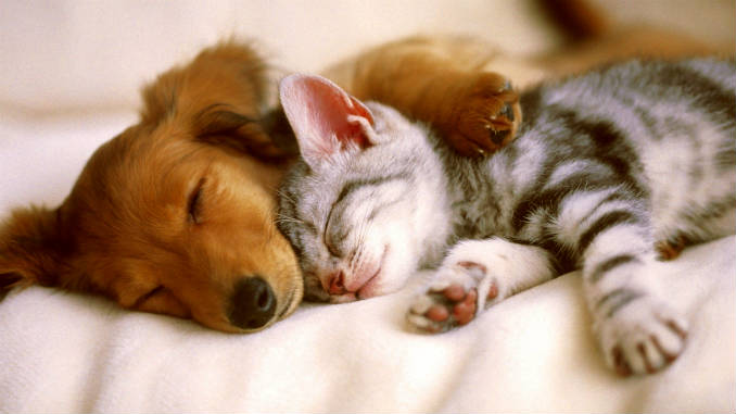 кошка с собакой дома фото