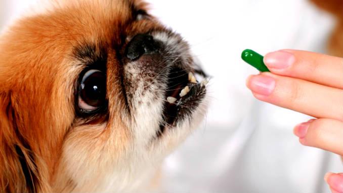 Дегельминтизация собак фото