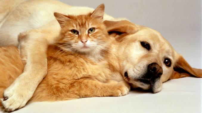 как подружить кошку с собакой фото