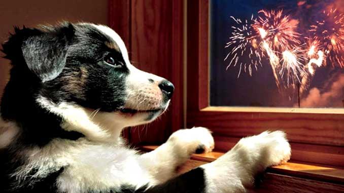 Собака и салют фото
