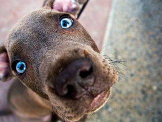 Характер собаки по фото