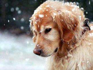 Собака мерзнет в снегу фото