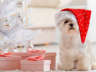 собака в подарок на новый год фото