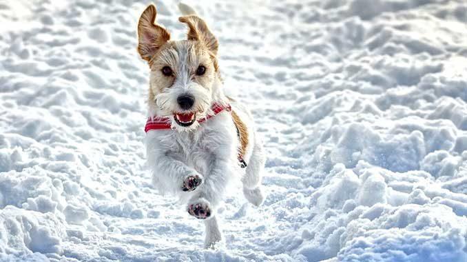 Собака зимой фото