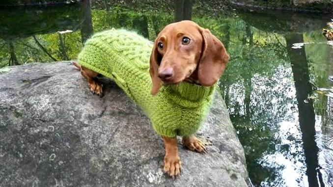 Вязаный свитер для собаки фото