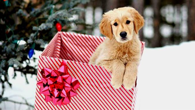 щенок в подарок фото