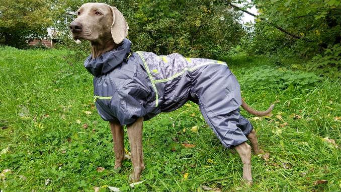 Дождевик для собаки фото