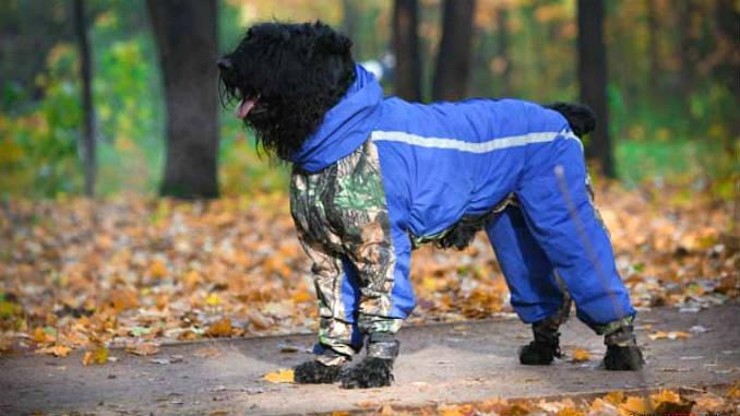 Ветровка для собаки фото