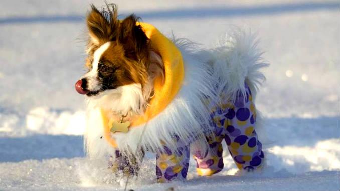 Утепленный комбинезон для собаки фото