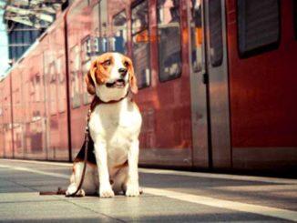 Перевозка собак в поезде фото