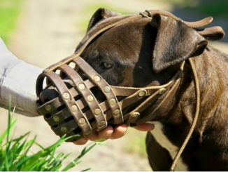 Намордник для собаки фото