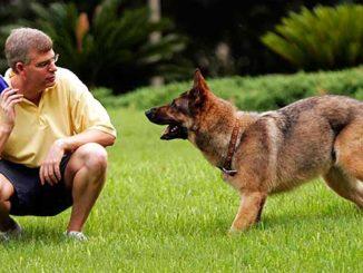 как дрессировать собаку фото