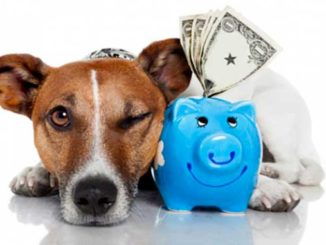 Покупка собаки фото