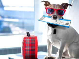 собака в самолете фото