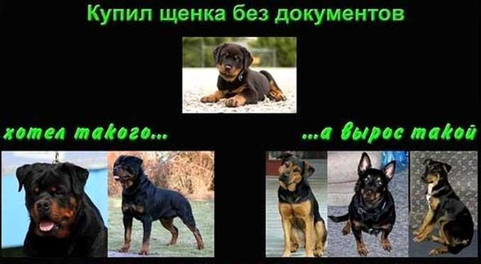 Собака без документов фото