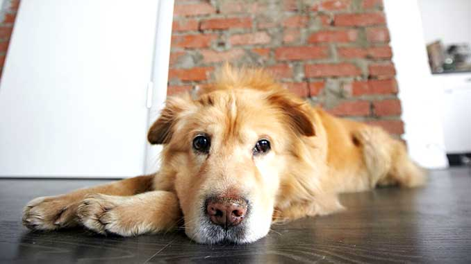 собака гадит дома, что делать