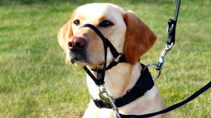 How to choose the right muzzle for your dog