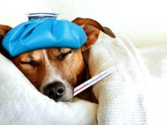 Простуда у собаки фото