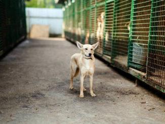 Собака из приюта фото